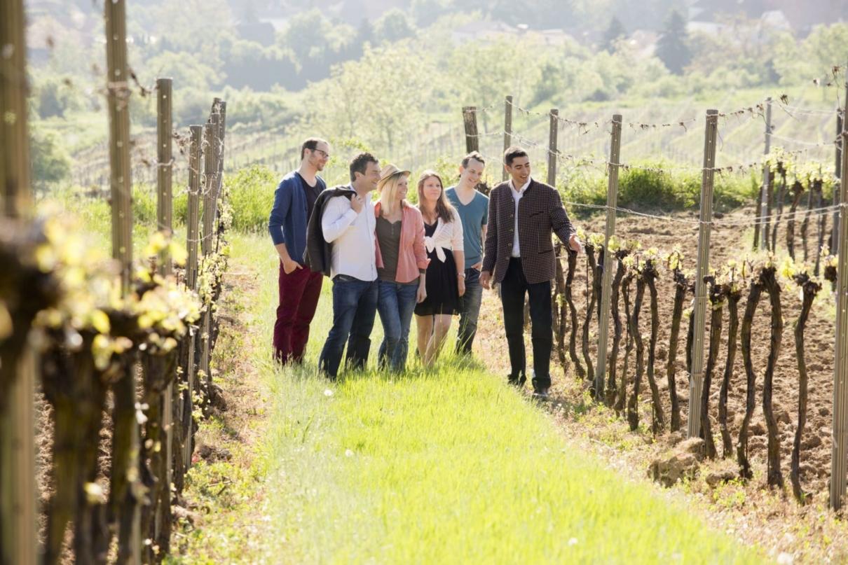 In die Grean gehen (c) Weinviertel Tourismus/Astrid Bartl